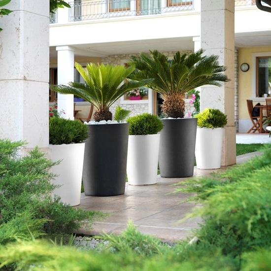 Grande plante exterieur en pot plante interieur ombre for Plante exterieur pour petit pot